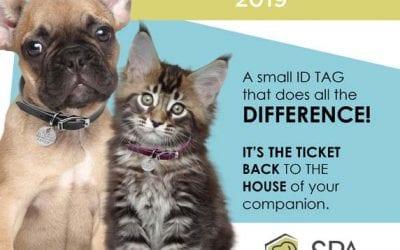 Registering your Pet- Advantageous and Mandatory