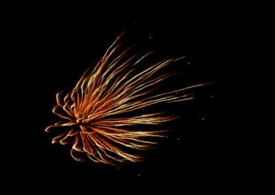Fireworks 5 Mark Linton