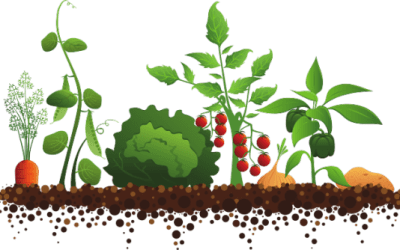 Livraison de compost